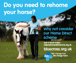 Blue Cross 2020 A (Cheshire Horse)