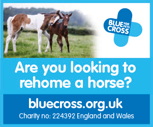 Blue Cross 2020 B (Cheshire Horse)